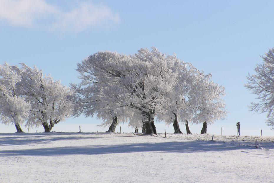 Schnee am Schauinsland